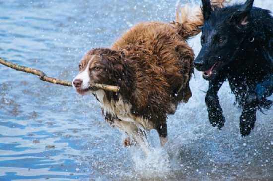 dogs-1246588_1280